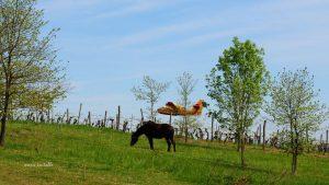 canadair cheval