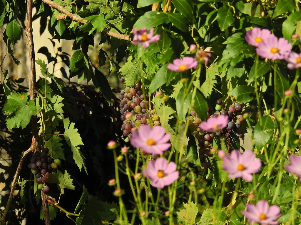 jardin-insolite-4