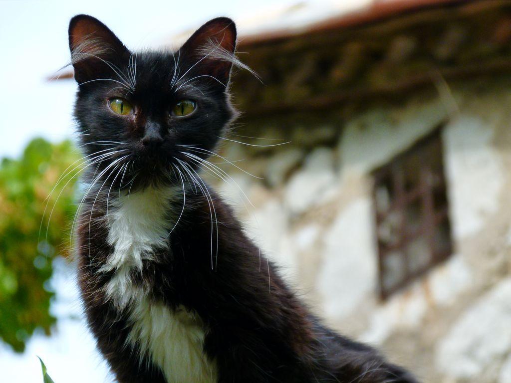 chat-errant-curieux